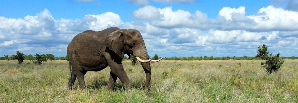 elephant-1240715_960_720_mini