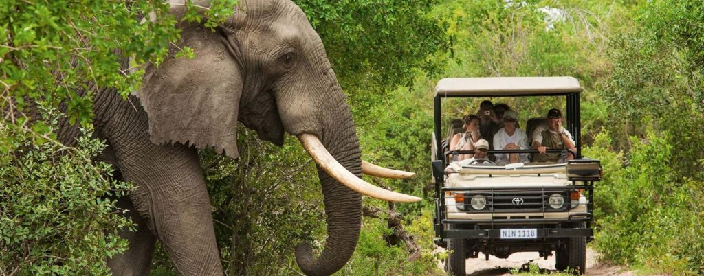 kruger-park-elephant-feature